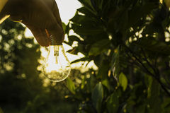 Hand of person holding light bulb for idea, success or solar energy Royalty Free Stock Images