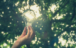 Hand of person holding light bulb for idea or success Royalty Free Stock Photos
