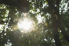 Hand of person holding light bulb for idea or success or solar Royalty Free Stock Images