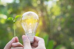 Hand of person holding light bulb for idea or success or solar e Stock Photo