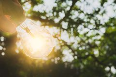 Hand of person holding light bulb for idea or success or solar e. Nergy concept Royalty Free Stock Photo