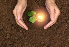 Hand of person holding light bulb for idea or success and solar. Energy concept Stock Photos