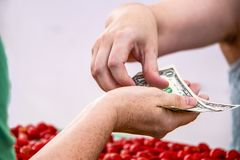 Hand of person receiving American dollars from another person with blurred cherry tomatoes below against white background royalty free stock photography