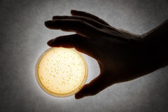 Hand with Petri dish Royalty Free Stock Photography