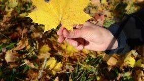 Hand pick autumn maple tree leaf show it closer. Hand pick autumn maple tree leaf fom ground and show it closer stock video