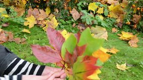Hand pick various color form tree leaves. cute autumn bunch stock video footage