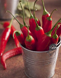 Hand Picked Chillies Royalty Free Stock Photo