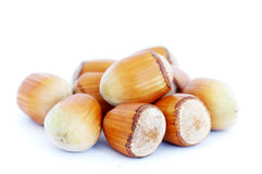 Hand-picked hazelnut Royalty Free Stock Image