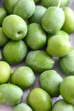 Fresh Green Olives. Hand picked raw green olives Royalty Free Stock Photos