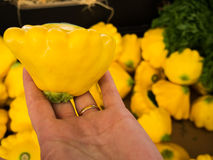 Hand Picked Squash. Nice Big Yellow Squash for sale at the Local Fruit and Vegetable Markets Stock Photo
