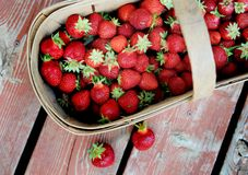 Hand picked strawberries in wooden basket on deck Royalty Free Stock Photos