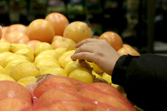 Free Hand Picking Lemon Royalty Free Stock Photo - 562455