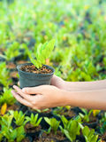 Hand picking new plant Stock Image