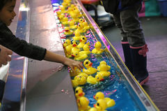 Hand picking yellow duck Royalty Free Stock Image