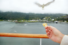 Hand with piece of bread and approaching seagull. Royalty Free Stock Photos