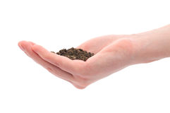 Hand and pile of black dirt Royalty Free Stock Photo
