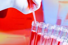 Hand with pipette on test tubes with red liquid in laboratory Royalty Free Stock Photos