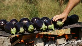 Hand placing eggplants on a baking plate stock video footage