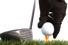 Hand placing golf ball to a tee. On white background Stock Image