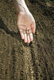 Hand placing seeds on soil Stock Photos