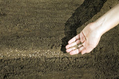 Hand placing seeds on soil Royalty Free Stock Photos