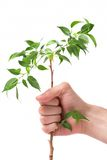 hand a plant Royalty Free Stock Image