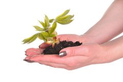 Hand with plant Stock Image