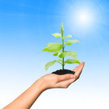 Hand with plant. Hand with a plant on background of blue sky with sun Royalty Free Stock Photos