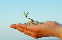 Hand and plant Royalty Free Stock Image