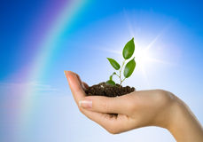 Hand with a plant. On a background of the blue sky and a rainbow royalty free stock photo