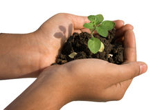Hand with plant Stock Photography