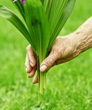 Hand and plant Royalty Free Stock Images