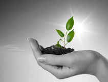 Hand with a plant on a background of the blue sky. Black-and-white background and green plant stock photography