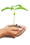 Hand and plant isolated Royalty Free Stock Images
