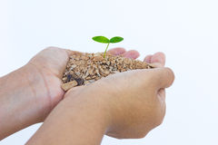 Hand and plant isolated on white background Stock Photos