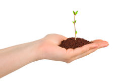 Hand and plant Stock Photo