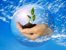 Hand with plant in sphere with sky and clouds Royalty Free Stock Images
