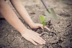 Hand planting on crack soil Stock Images