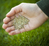 Hand planting grass seeds Royalty Free Stock Photo