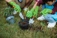 Hand planting a new plant on pot. gardening activity. Gesture of hand planting a new plant on pot put some soil in it. gardening activity with family stock image