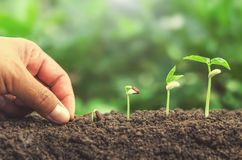 Hand planting seed in soil plant growing step. Concept Stock Image