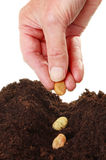 Hand planting seeds Stock Photos