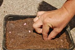 Hand planting seeds Stock Image