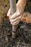 Hand planting a tree Royalty Free Stock Photography