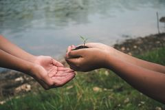 Hand for Planting trees back to the forest. Hand for Planting trees back to the forest, Creating awareness for love wild, Wild plant concept stock photos