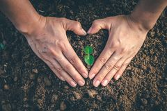 Hand for Planting trees back to the forest. Hand for Planting trees back to the forest, Creating awareness for love wild, Wild plant concept royalty free stock photography