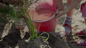 Hand planting young tree stock footage