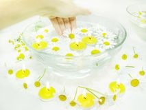 Hand in plate with daisy flowers Royalty Free Stock Photography