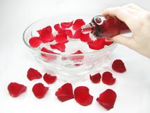 Hand in plate with rose petals Royalty Free Stock Photo