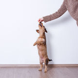 Hand playing with dog Royalty Free Stock Photos